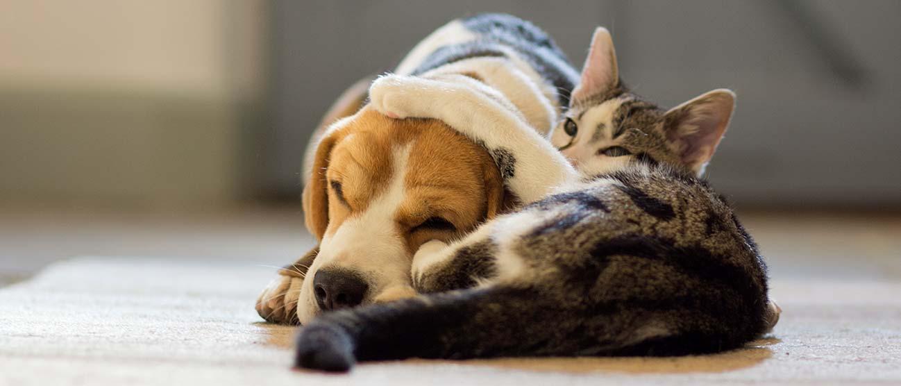 alergias a las mascotas1.jpg