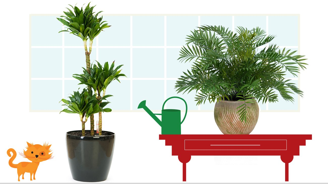5 best allergy friendly house plants | zyrtec®
