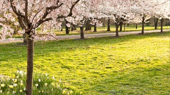 Understanding Seasonal Outdoor Allergies